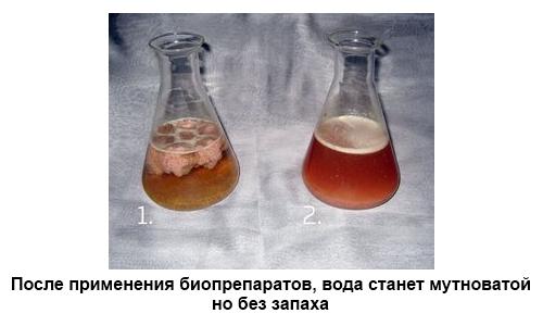До и после применения биопрепаратов